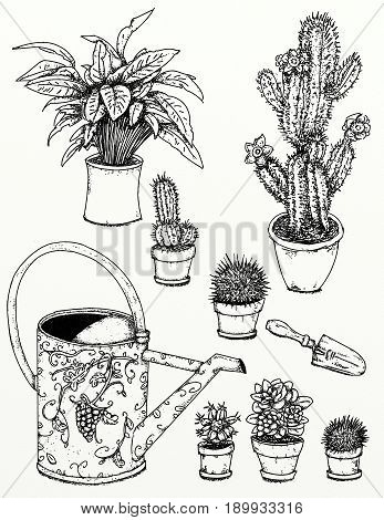 Realistic drawings of plants and gardens Garden flowers, plants, gardening tools With flowering cactus plants,