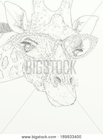 A female giraffe with 50s glasses vintage.