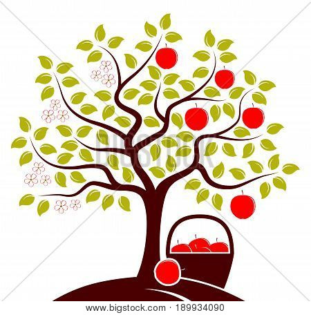 vector apple tree in two seasons and basket of apples isolated on white background