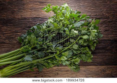 Celery leaves. Celery leaves on rustic oak table.