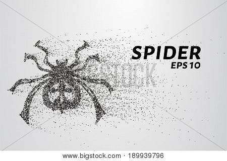 Spider Of Particles. The Spider Consists Of Circles And Points. Vector Illustration.