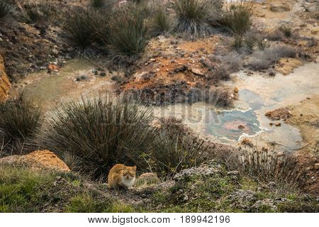 Cat Sitting On Fild Of Hermal Springs  In Loutra Edipsou
