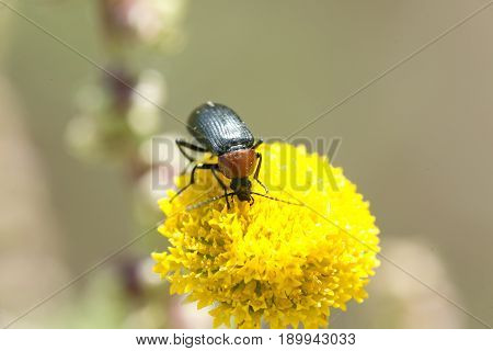 Macro Photography Of An Insect Eating.