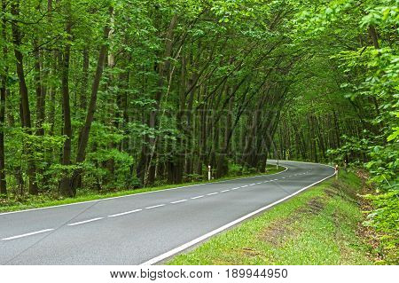 The photo shows an even, asphalt road leading through a deciduous forest. It is spring, the branches of the trees cover the green leaves. Growing on both sides of the tree, they bend towards the axis of the road. At the end of the road is a sharp left tur