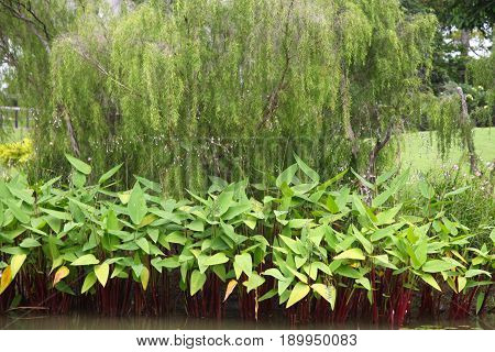 Green leaves of various plants Singapore south east asia