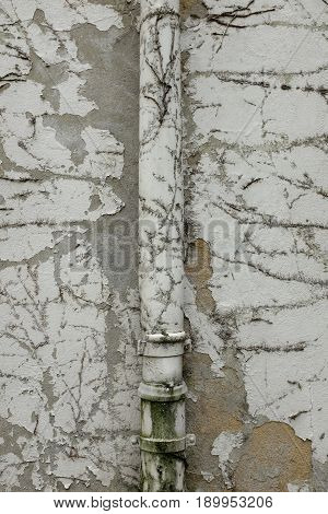 Scratched plaster and traces of ivy on the plaster of an old house facade