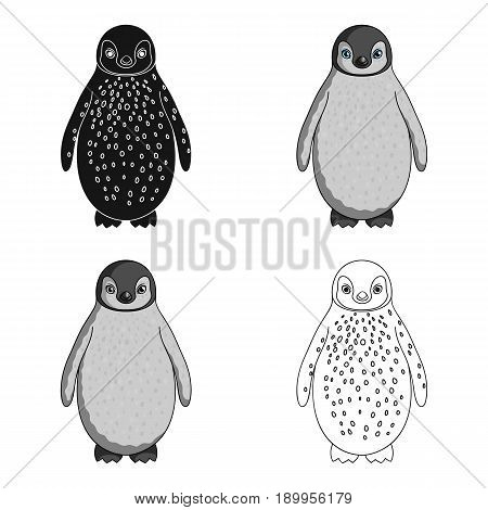 Penguin.Animals single icon in cartoon style vector symbol stock illustration .