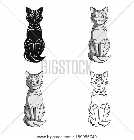 Gray cat.Animals single icon in cartoon style vector symbol stock illustration .