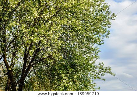 Tree in summer Park on a Sunny day. A view of the trees and the lawned hilly terrain.