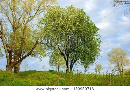 A landscape on a summer Park on a Sunny day. A view of the trees and the lawned hilly terrain.