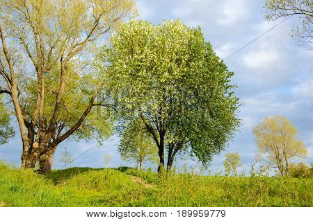 A landscape on summer Park on a Sunny day. A view of the trees and the lawned hilly terrain.