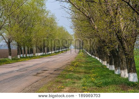 The Road From Pavlovsk To Mariyanka