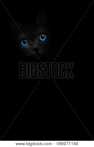 Black cat with blue eyes is looking out of the shadow on the black background. Dark cat, kitten orange eye. Shadow black kitty. Cat in black. Cute kitten. Incredible dark shadow cat