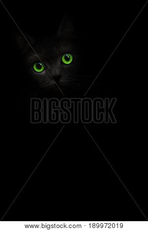 Cute black cat with green eyes is looking out of the shadow on background. Cat pussycat. Green eyes cat. Art shadow kitty. Cat in black. Cute kitten. Incredible dark shadow kitten