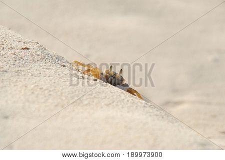 Macro image of crab exploring the beach