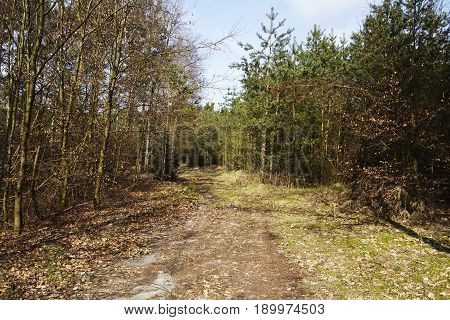 Path Into A Wood (nature Reserve)