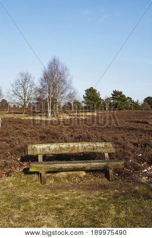 Bench Into Heathland In Spring