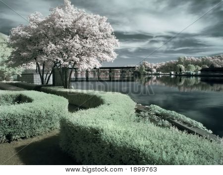 Garden By The River