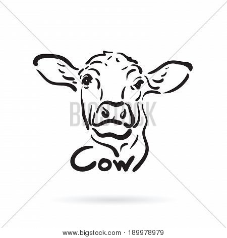Vector of hand drawn cow on white background. Farm Animal.