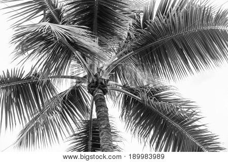 Top of palm tree on cloudy sky background in black and white