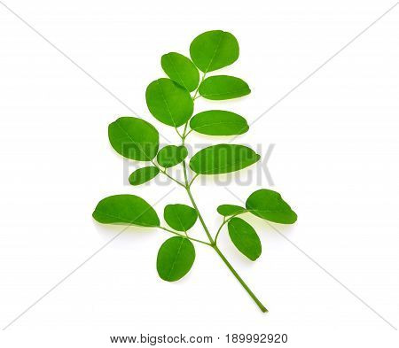 branch of green moringa leavesTropical herbs isolated on white background