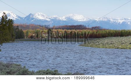 Choppy Madison River in the foreground with snow capped rugged mountains and pine trees in the background. Photographed in Yellowstone National Park.