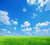 Nature background. Clear spring summer landscape with green grass and blue sky. poster