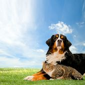 Dog and cat together on grass, sunny spring day and blue sky. poster