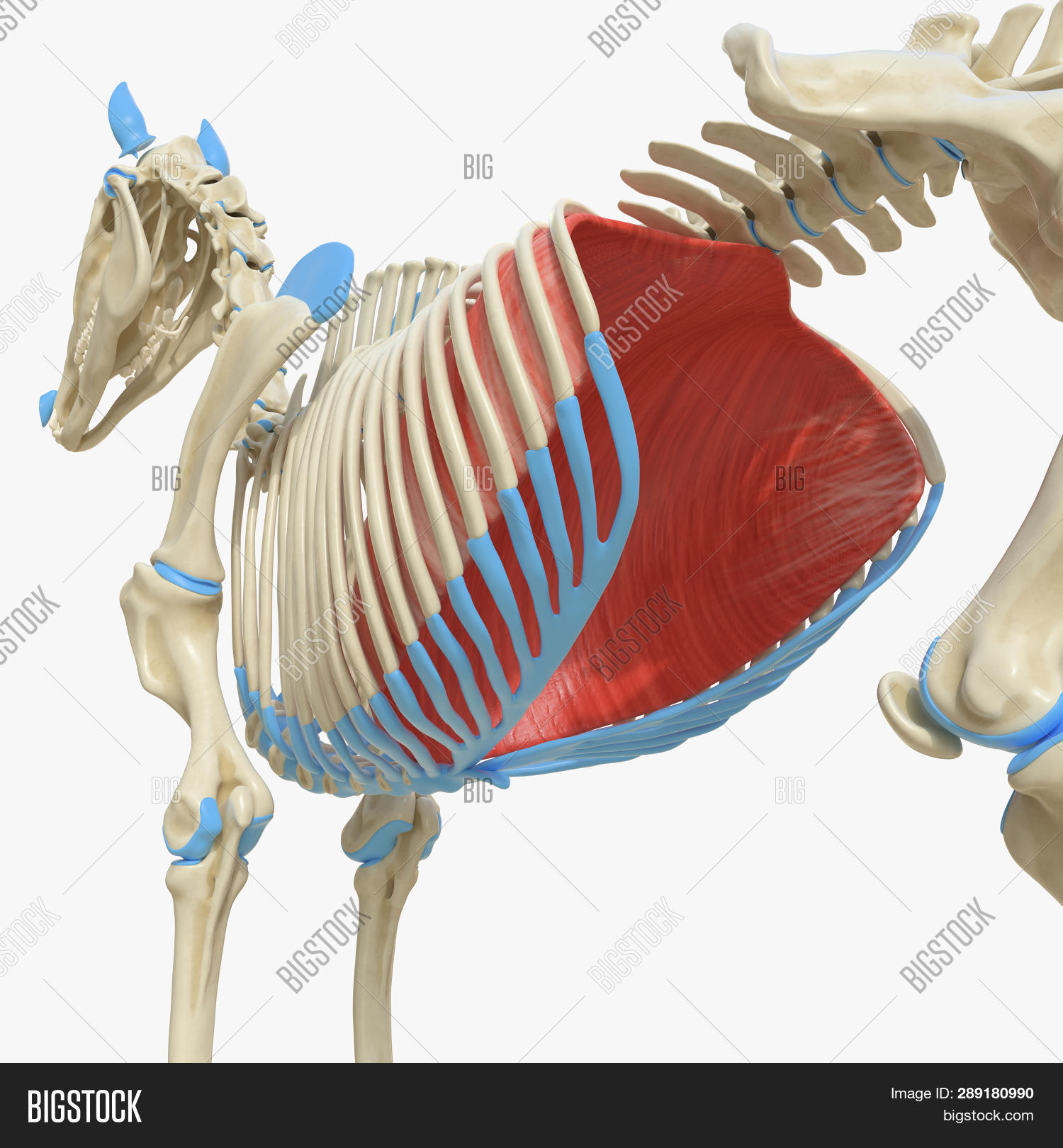 3d Rendered Medically Image & Photo (Free Trial) | Bigstock
