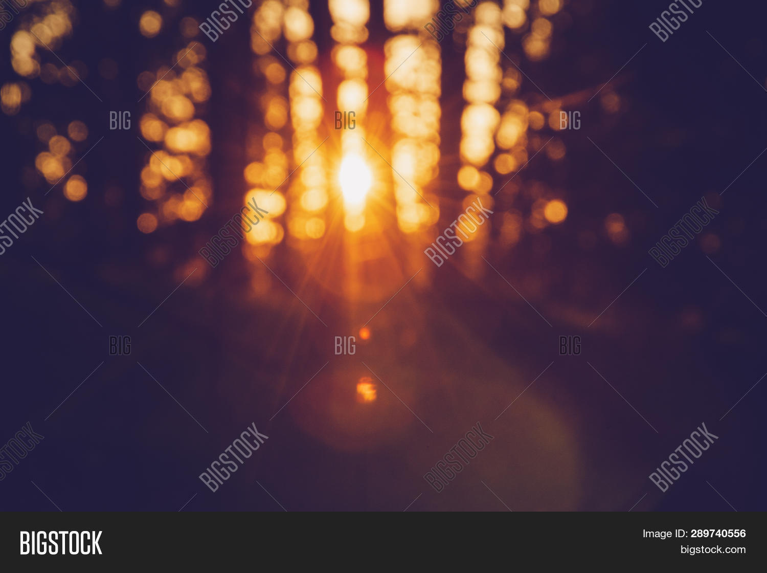 Sunset Pine Forest Image Photo Free Trial Bigstock