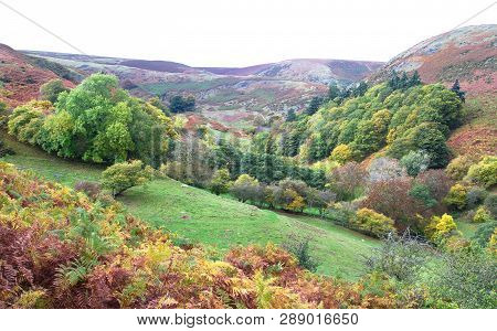 Fall Colors Dominate The Landscape In Rural Shropshire, England.