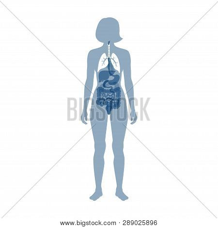 Vector Isolated Illustration Of Lung Anatomy. Human Respiratory System Icon. Healthcare Medical Cent