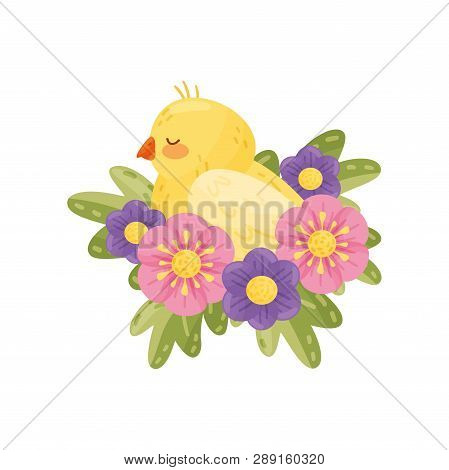 Yellow Canary With Closed Eyes On White Background.