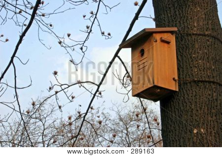 a wooden bird box in a tree poster
