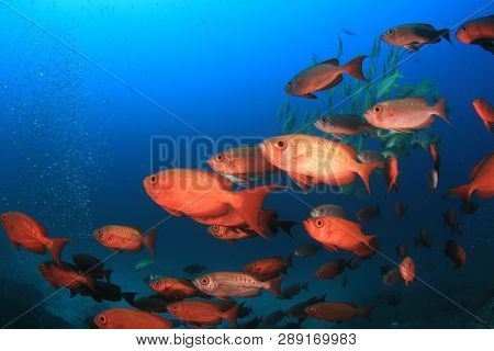 Coral reef and fish in ocean. Similan Islands, Thailand