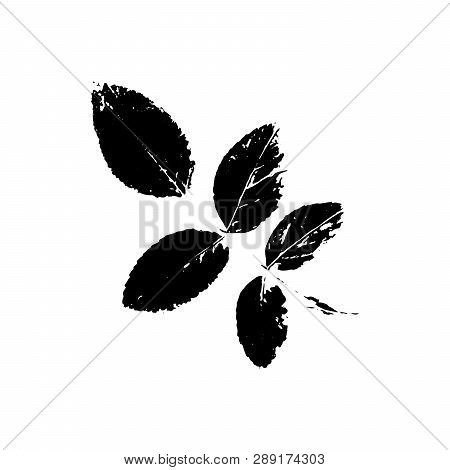 Black Rowan Silhouette With Leaf Of Tree. Single Isolated Clipart. Prints Of Leaves On Branch. Flora