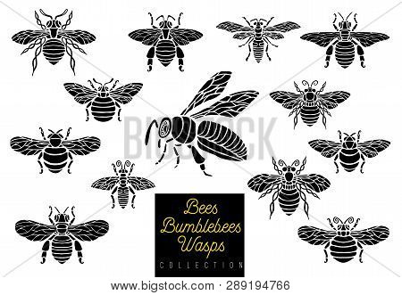Honey Bee Bumblebees Wasps Set Sketch Style Monochrome Collection Insert Wings Emblem Symbols Hand D