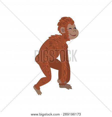 Ape, Monkey Animal Progress, Biology Human Evolution Stage, Evolutionary Process Of Woman Vector Ill