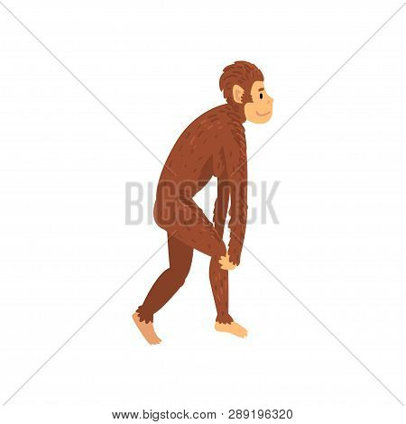 Female Australopithecus, Biology Human Evolution Stage, Evolutionary Process Of Woman Vector Illustr