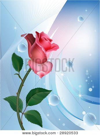 Rose on blue with water bubbles