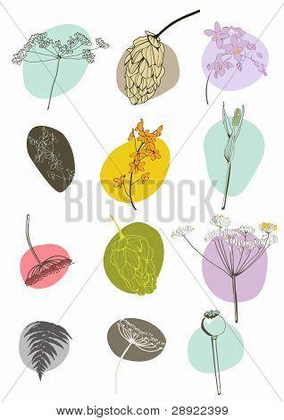 hand drawn design flowers