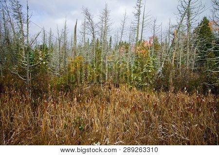 Wetland Conservation. Panoramic Scenic Landscape Of Preserved Wetlands In The Upper Peninsula Of Nor