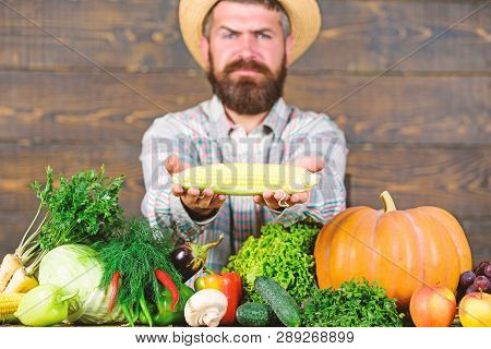 Farmer Hold Corncob Or Maize Wooden Background. Farmer Presenting Fresh Vegetables. Farmer With Home