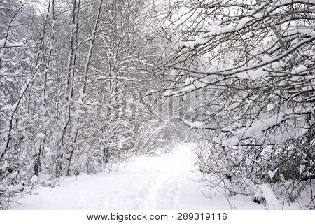 View of wintery landscape under a snow storm in Vancouver Island, Canada