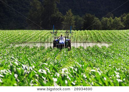 Tractor working on a potato farm