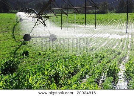 Pivot irrigatiesysteem een boerderij veld drenken