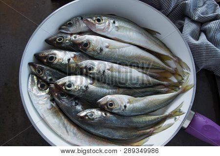The Mediterranean Horse Mackerels In The Pan (black Sea Horse Mackerel,mediterranean Scad, Common Sc