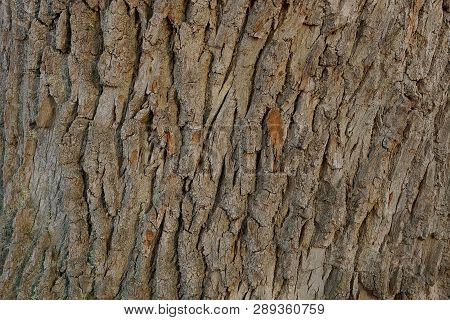 Gray Brown Wooden Texture Of Dry Bark On A Tree