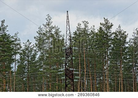 Black Iron Electric Pole With Wires Against The Background Of Pine Trees And Sky