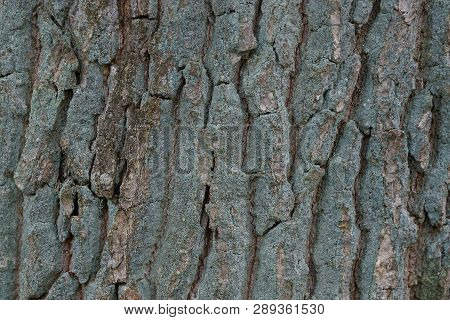 Gray Green Wooden Background From Dry Bark On A Tree